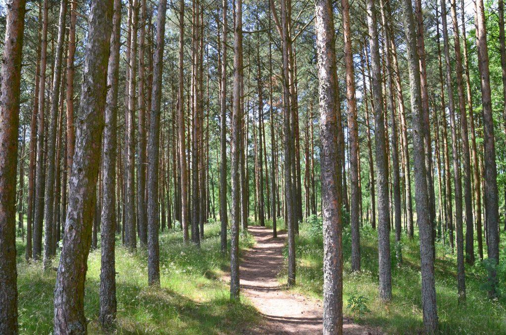 Koerse Schoorwal in Litouwen