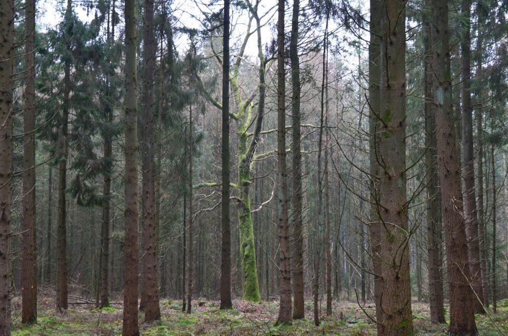 Wandelroutes in Drenthe